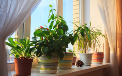 Bring the Garden Indoors this Winter