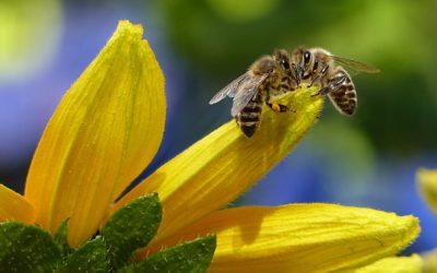 Please Bee Kind