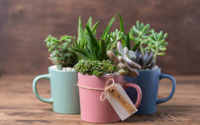 Up-Cycling Winter Potted Colour